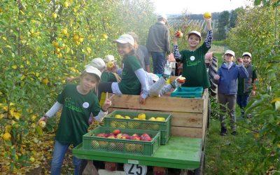 Kleine Gärtner bei der Apfelernte
