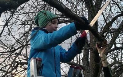 Bäume schneiden wie die Profis
