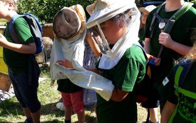 Expedition in die Welt der Bienen