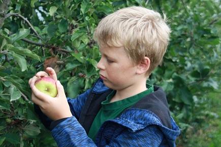 Minigärtner bei der Apfelernte