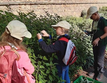 Extravagante Botanik im Schlossgarten